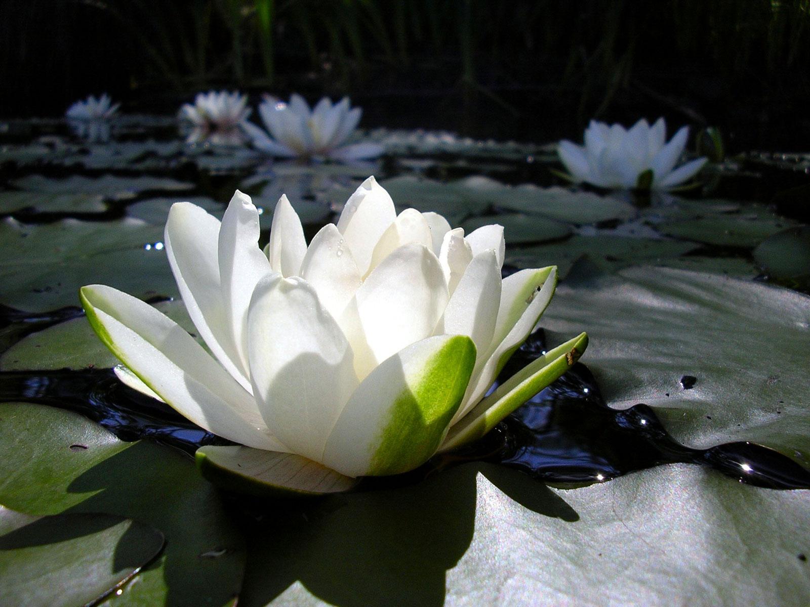Medicine Buddha Toronto Healing Practice Community